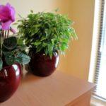 Rośliny, które warto trzymać w sypialni dla lepszego snu