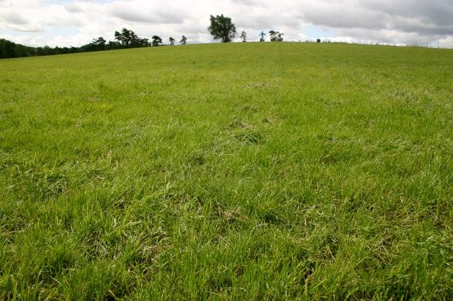 Nasiona traw pastewnych