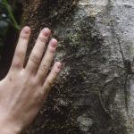 Arachnofobia, czyli jak radzić sobie z lękiem przed pająkami?