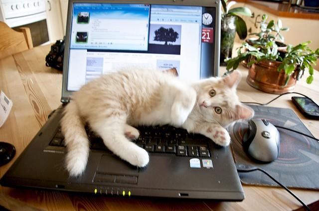 Zdrowotne porady w Internecie – rzetelne czy niebezpieczne?