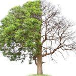 Regeneracja szpiku – przełamanie mitów