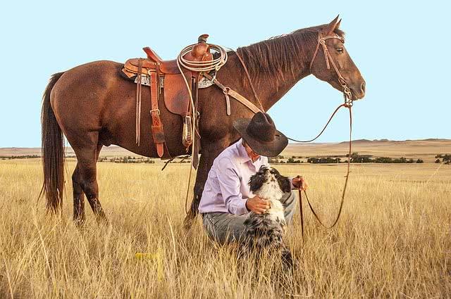 Własna stadnina koni sportowych – niezbędne elementy