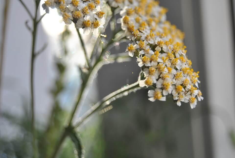 zioła na żołądek